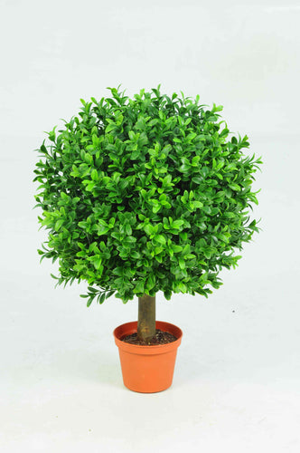 Boxwood Ball in Pot 25cm