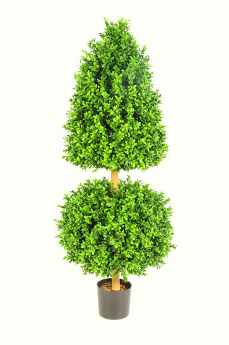 Boxwood A Ball 3ft
