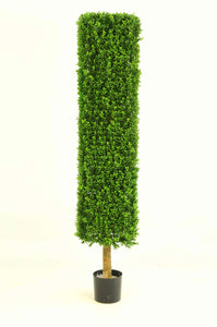 Boxwood Cylinder 4.5ft