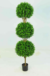 Boxwood 3 Ball 4ft