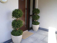 Load image into Gallery viewer, Boxwood 3 Ball 4ft