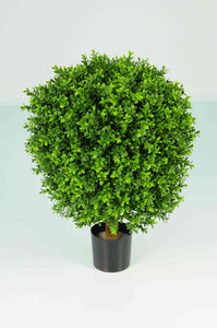 Boxwood Ball In Pot 50cm Oval