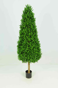 Boxwood Tower 5ft