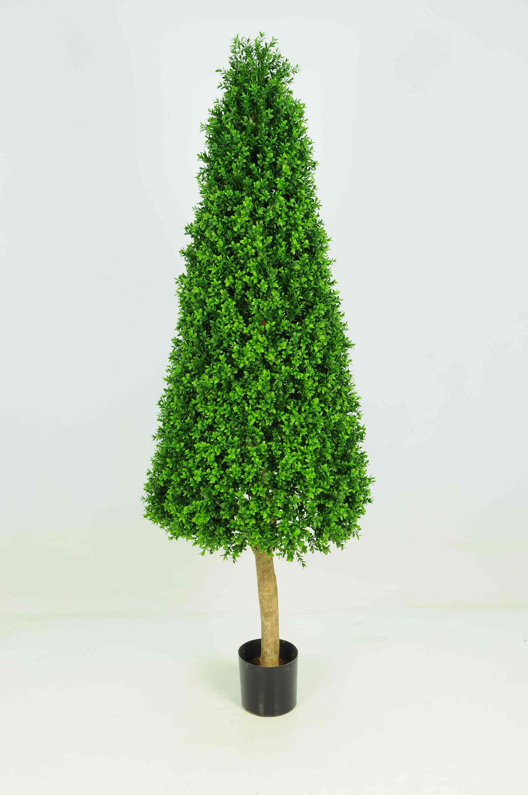 Boxwood Tower 6ft