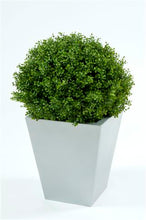 Load image into Gallery viewer, Boxwood Ball In Pot 50cm Oval