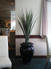 Load image into Gallery viewer, Pandanus Base Plant