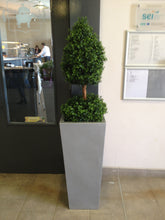 Load image into Gallery viewer, Boxwood A Ball 3ft