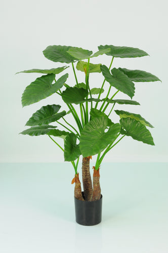 Alocasia Calidora Palm