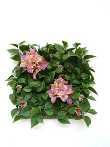 Bougainvilla  with Flower Tile