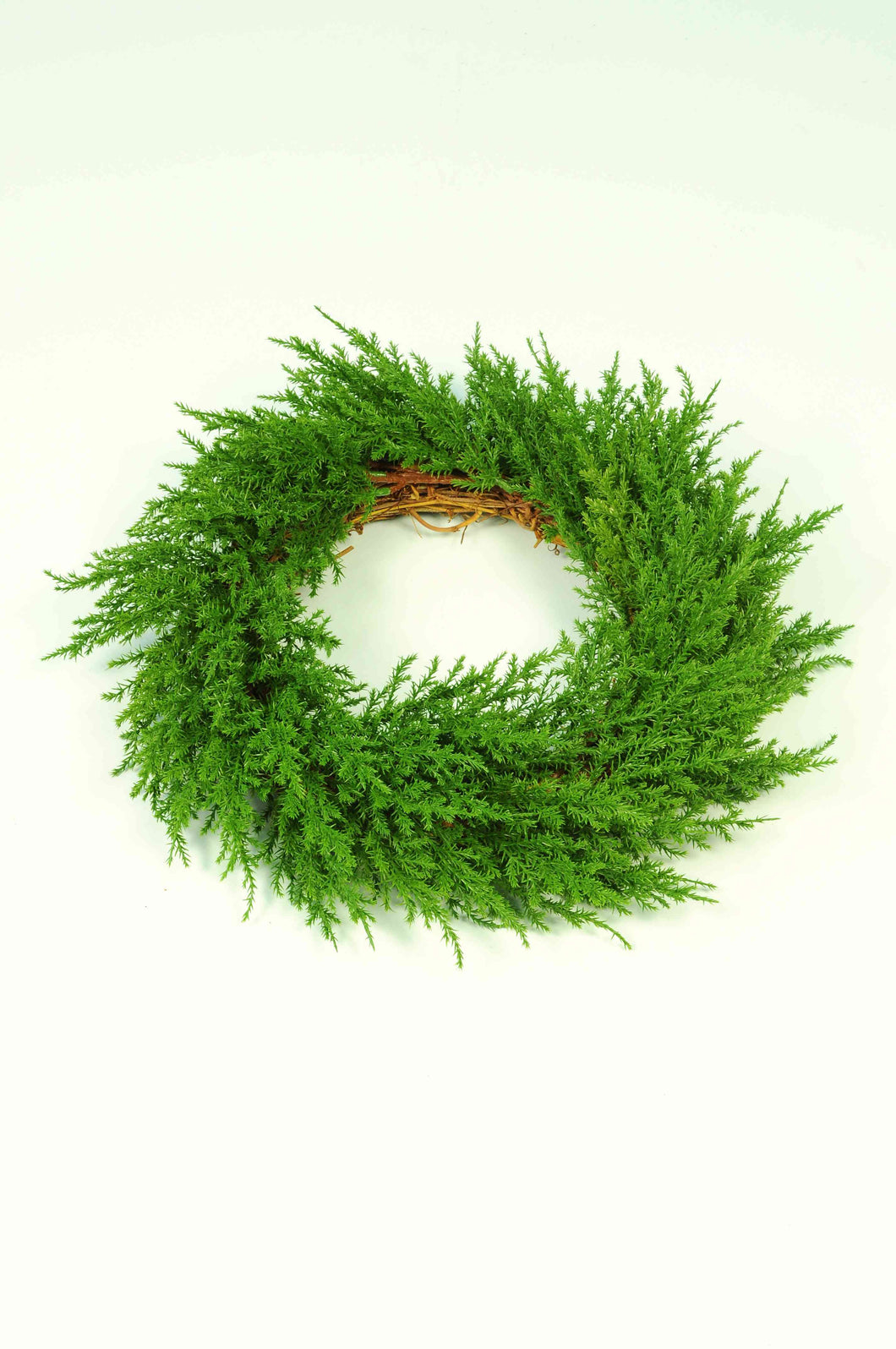 Wreath Cypress