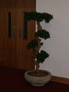 Bonsai Wood Tree