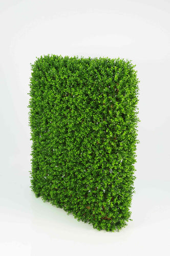 Boxwood Hedge Large