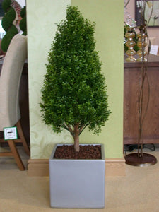 Boxwood Tower 2.5ft