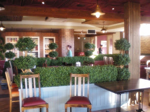 Boxwood Hedge Medium
