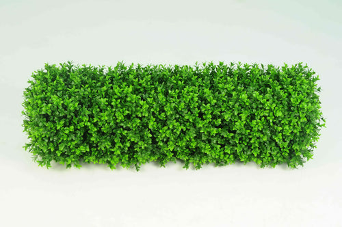 Boxwood Hedge Small