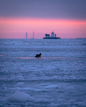 Load image into Gallery viewer, 'Eastern Coyote traversing frozen Lake Erie at dawn'
