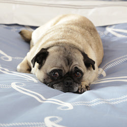 Gus the Pug on the Piper Blue Duvet Cover