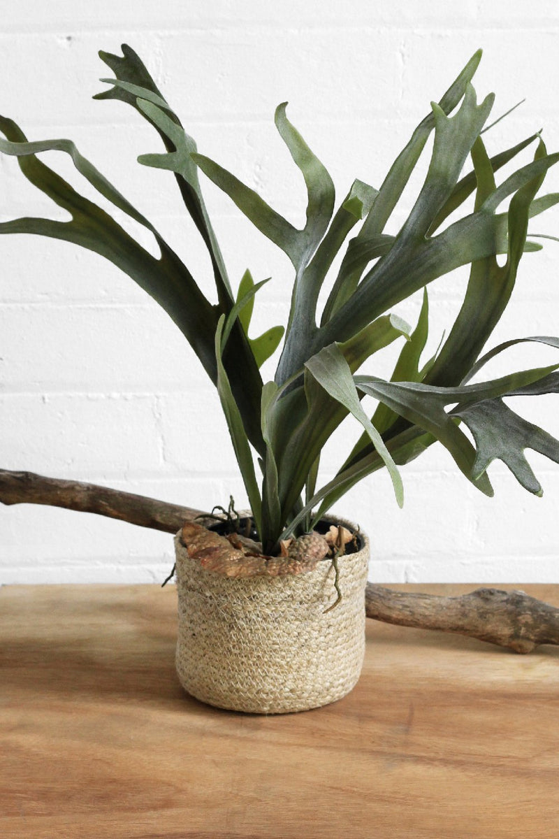 SanBasics Staghorn long Leaf Fern – Artifical