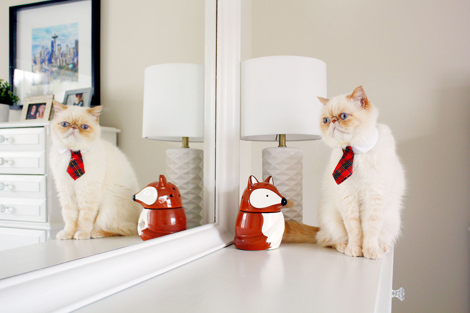 Ludwig von Cat, a Flat face exotic shorthair white cat, for vegan and cruelty-free beauty