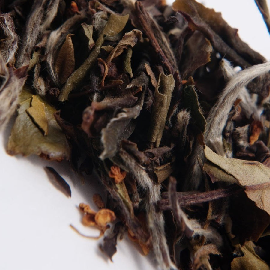 Traditional organic white tea infused with peaches from TeBella tea company sold in Tallahassee, FL.