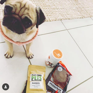 @miss_daisydeepug Enjoying Her Order!