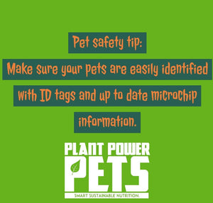 Halloween Pet Safety Tip