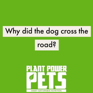 Why did the dog cross the road?