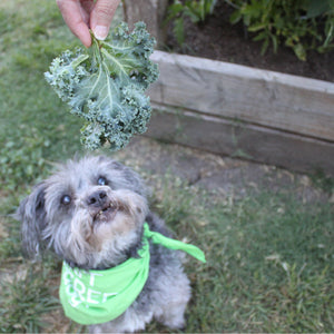 Should dogs be Vegan? (Guest Post) – Plant Power Pets