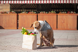Can Your Dog Eat a Plant Based Diet?