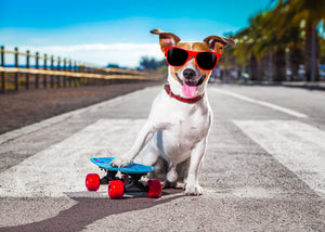 Top 7 Outrageously Fun Ways to Exercise with your Pooch!
