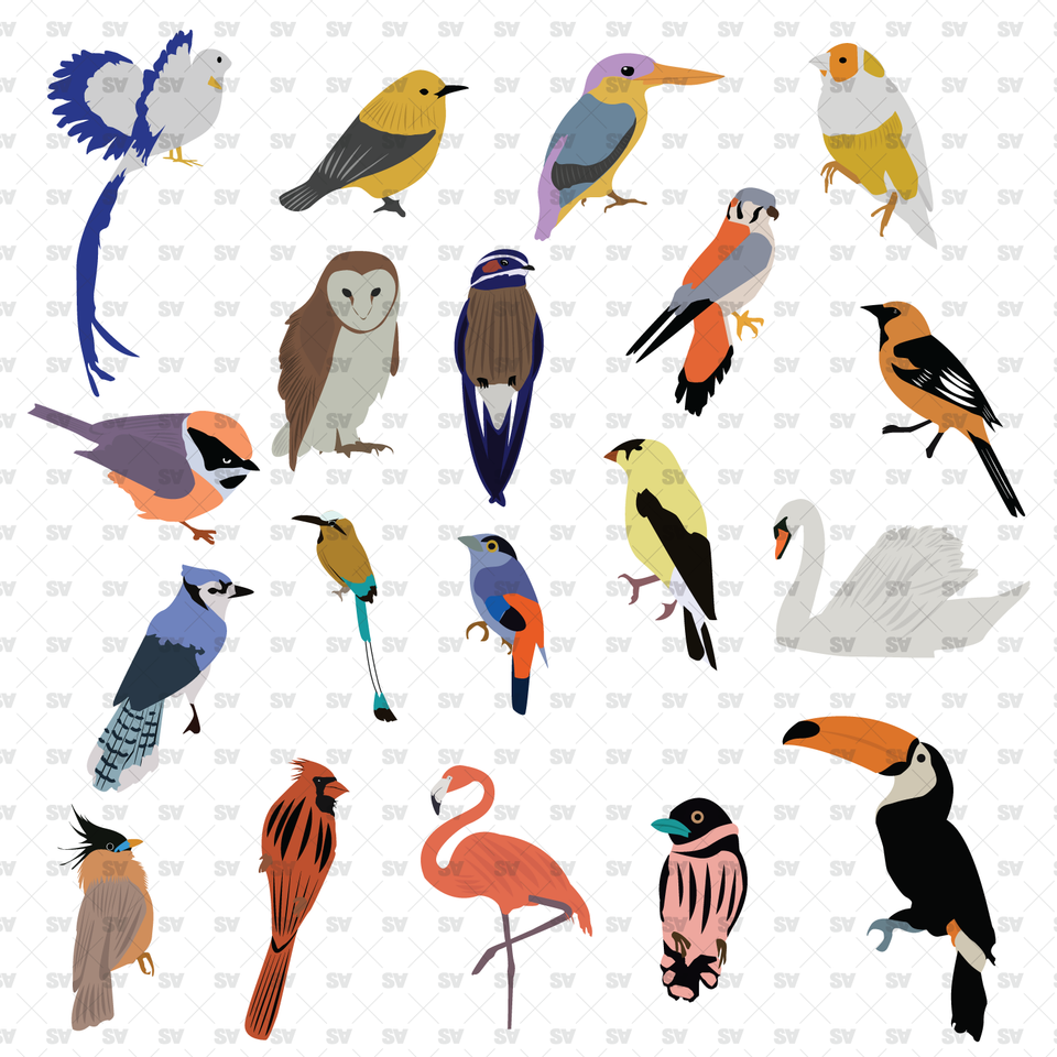 Vector Birds Pack (19 Figures)