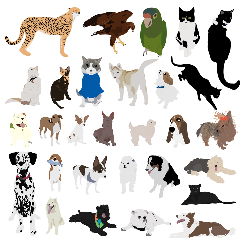 animal vector illustration flat