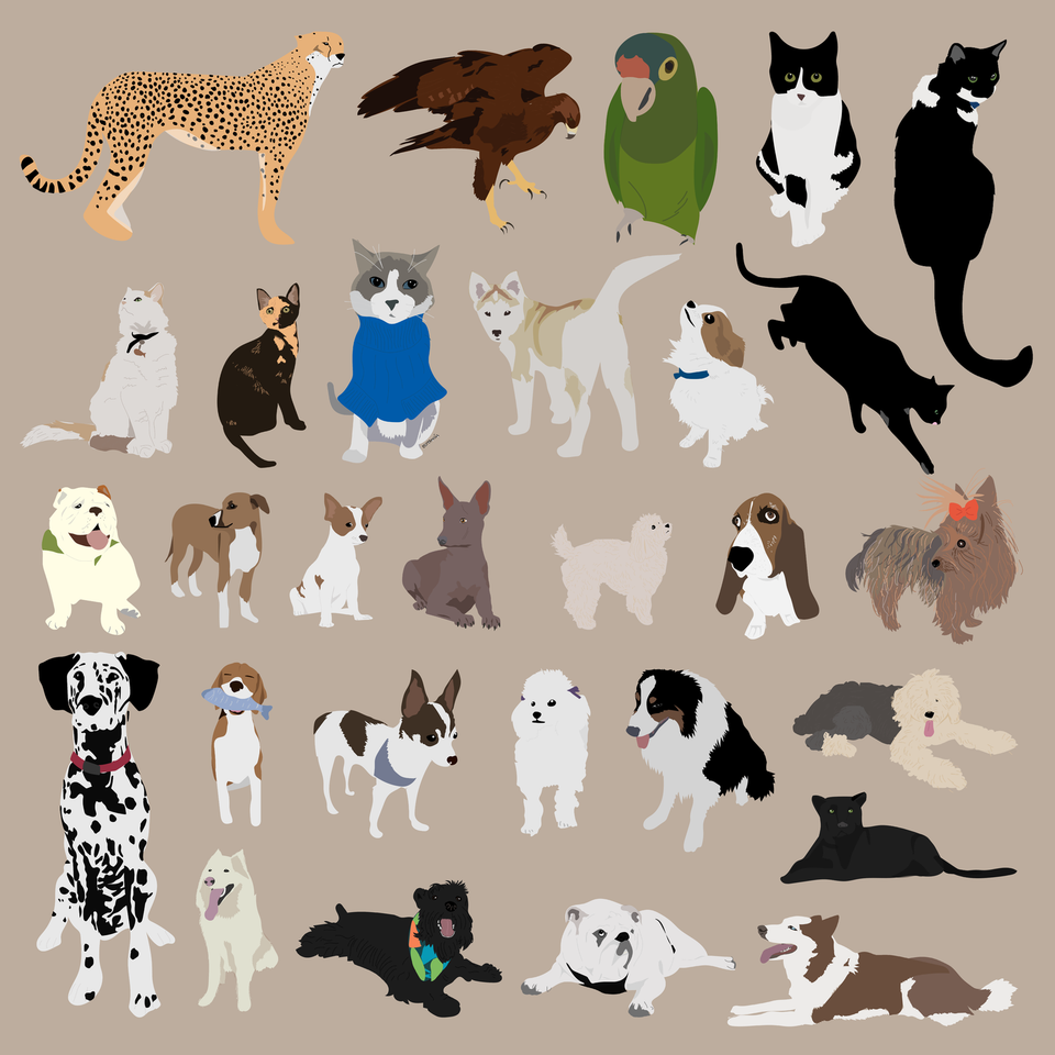 animals vector illustration flat