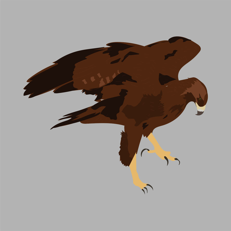 animals vector illustration flat eagle