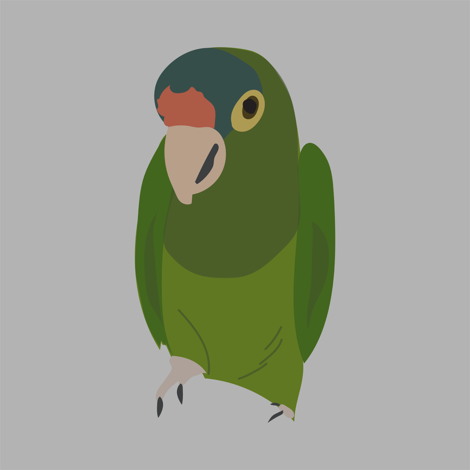 animals vector illustration flat parrot