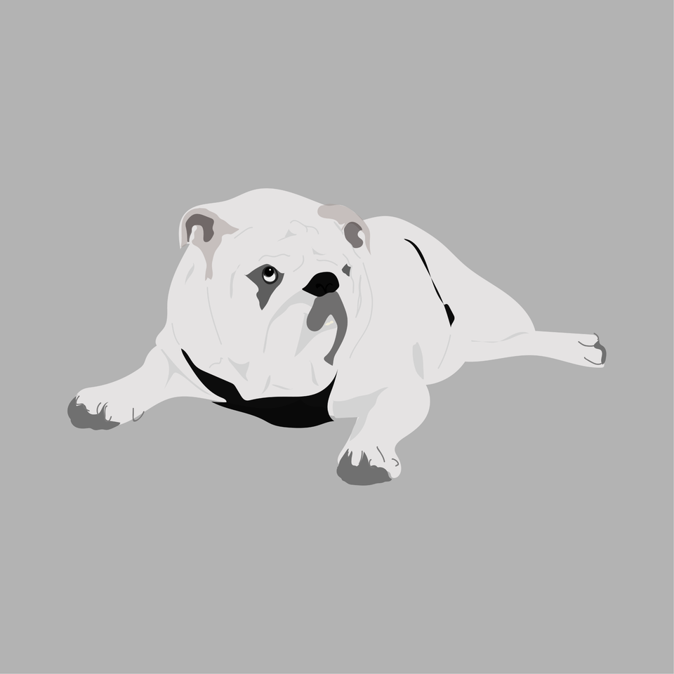 animals vector illustration flat bulldog