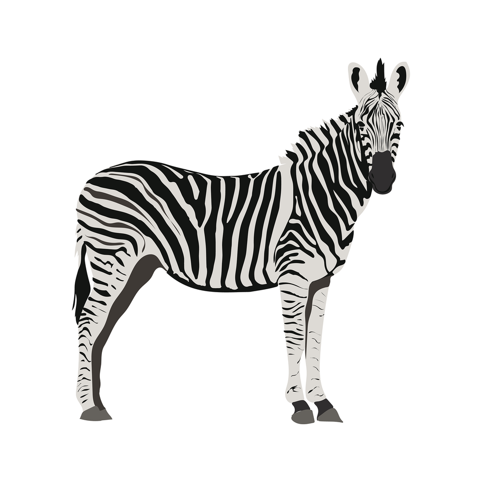vector zebra download