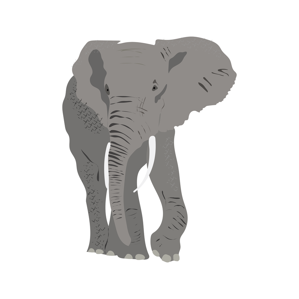 vector elephant download