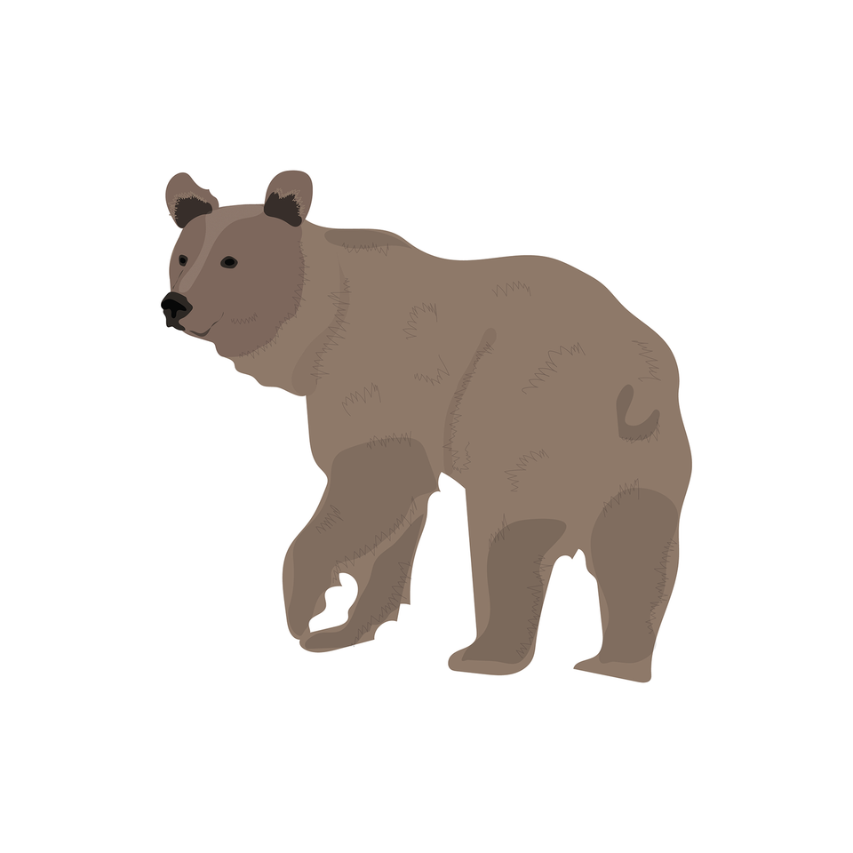 vector bear download