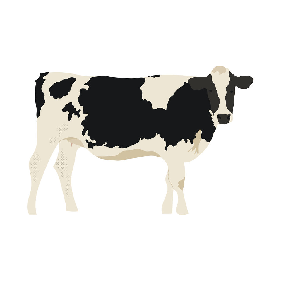 vector cow free download
