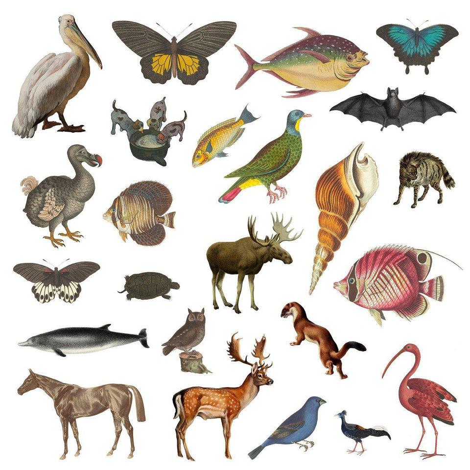 Animal Cutouts (24 PNGs)