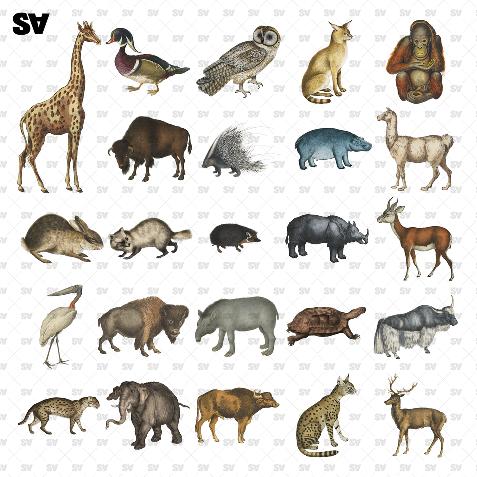 Wild Animals Cutouts (24 PNGs)