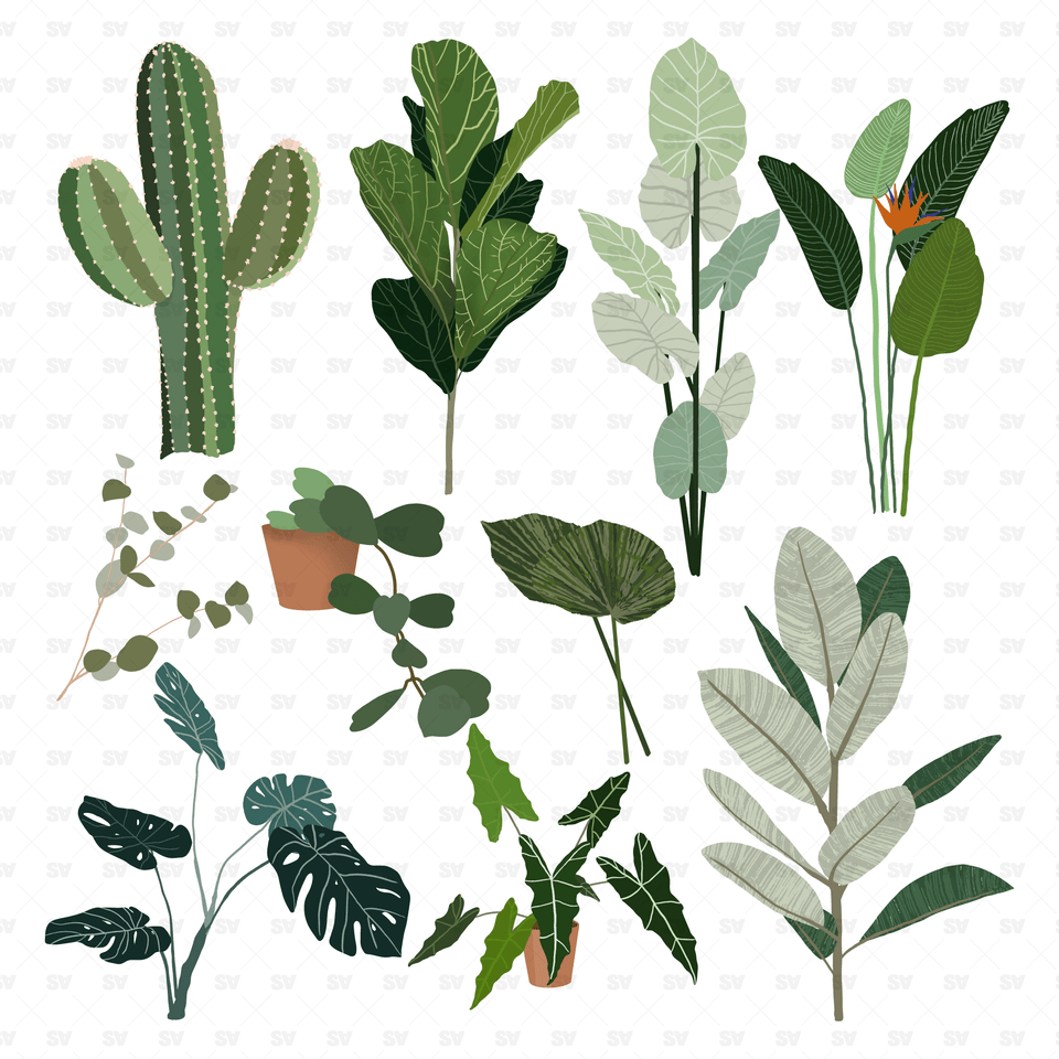 flat vector plants png