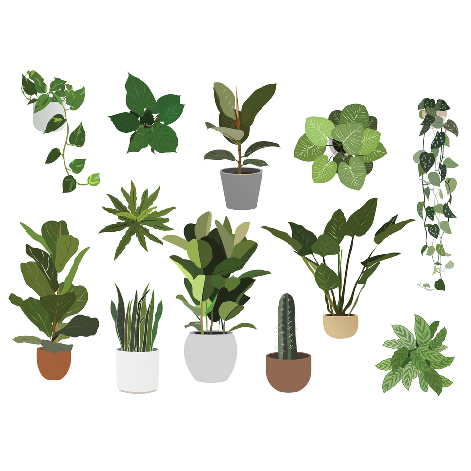 Vector Plants Pack-Vectors-Studio Alternativi