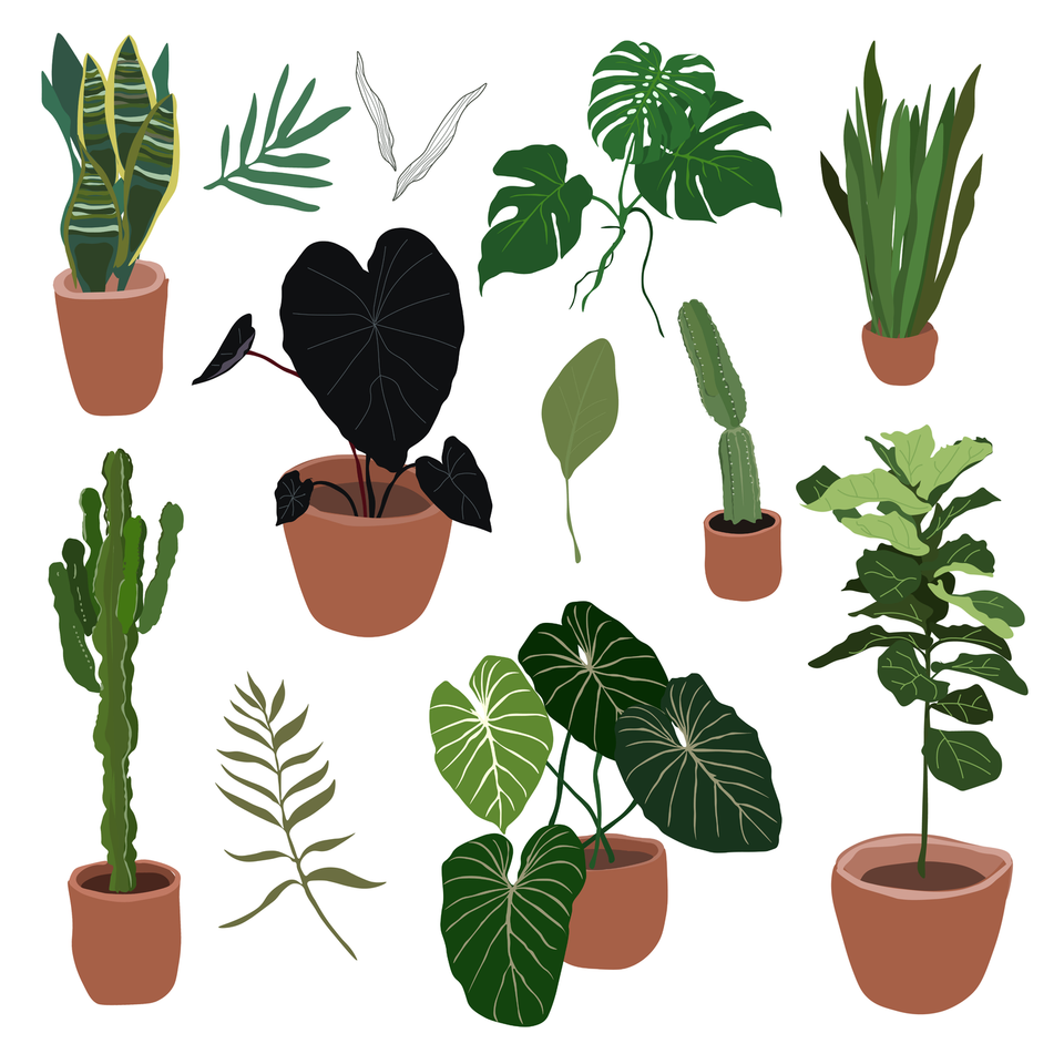 plants illustration free download