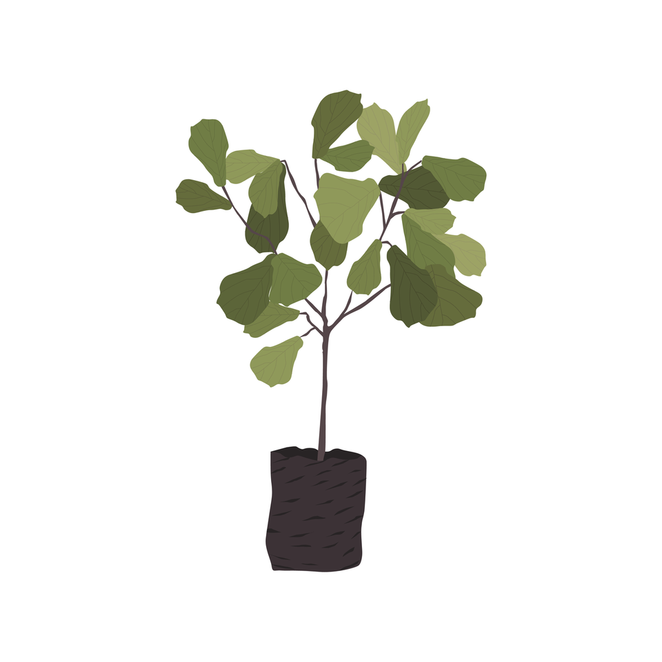 vector png plant tree