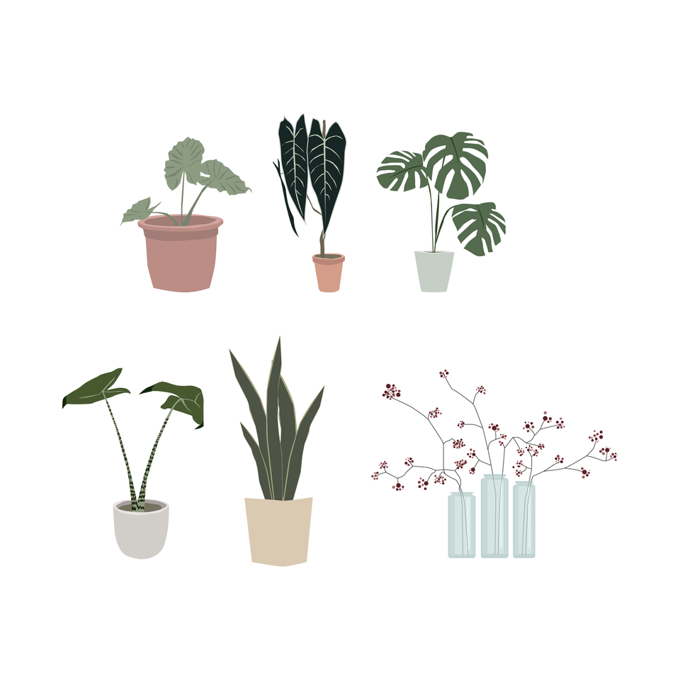 interior plants vector png