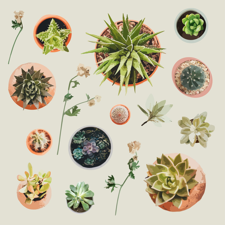 Plants from above
