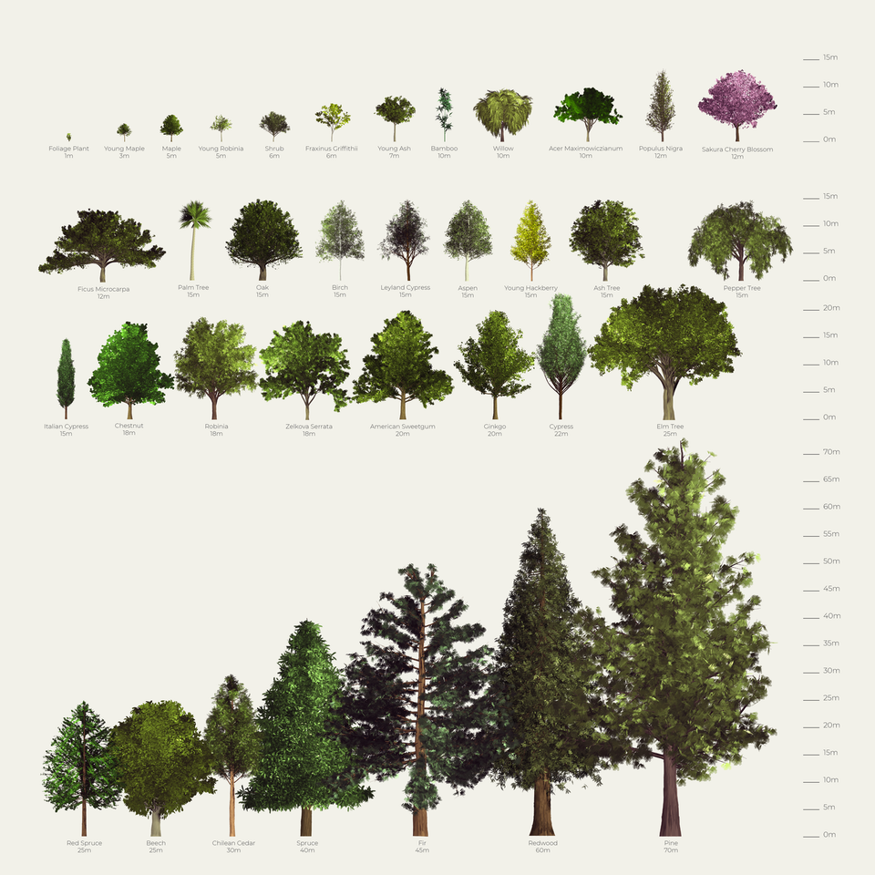 trees png cutout