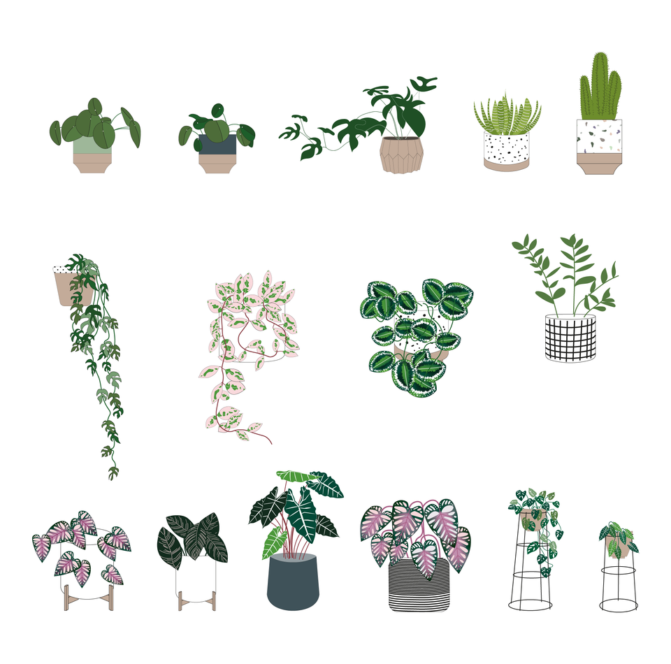 Interior Plants Pack (15 Plants)